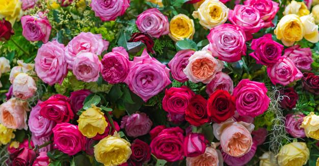 بهار فلاورز رز هایی در رنگ هایی متنوع