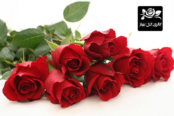 گل رز بهار در گالری گل بهار