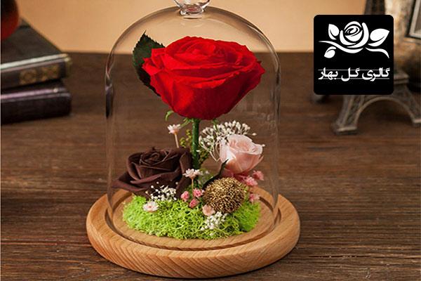 گل زر در گالری گل بهار مدل کادویی