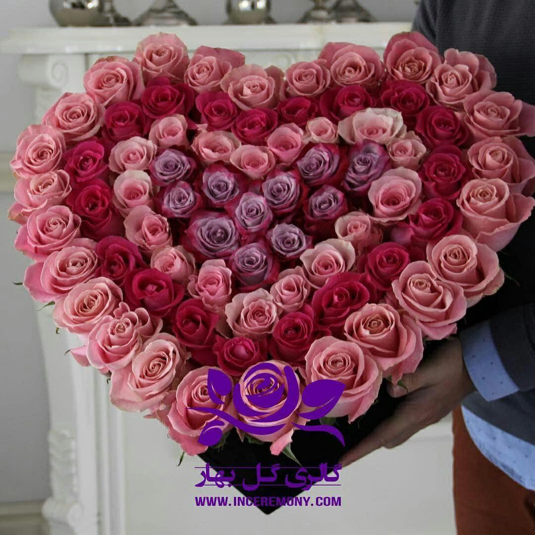 گل رز - بهار فلاور