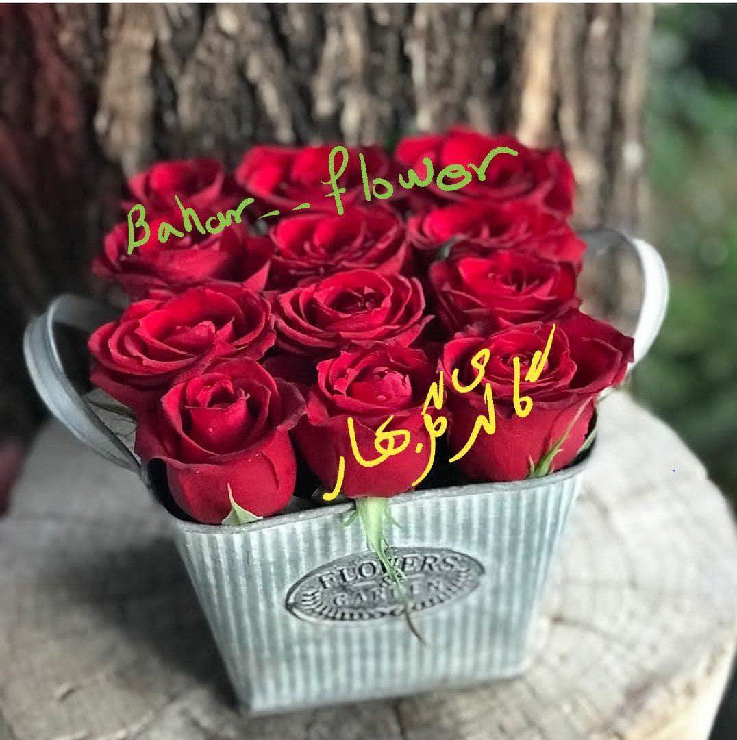 بهارفلاور-باکس گل رز -گل رز زرد ،هلندی قرمز،رز ایرانی
